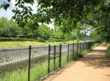 桜並木の遊歩道:5月